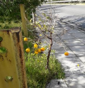 mantarinia-portokalia-frouta-dentra-perama-dromos-volta-perioxi-peiraias-keratsini-gotravelyourselfgr
